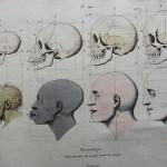 Rappresentazione dell'angolo facciale di Camper