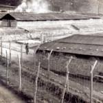 Una rara immagine di un campo di prigionia